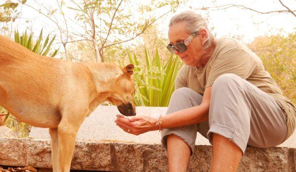 Volunteer Helen with feeding run dog