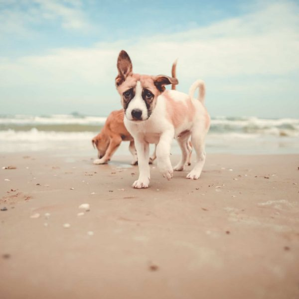 Puppies on beach