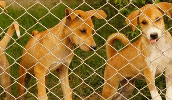 Livestock parasite treatment puppies